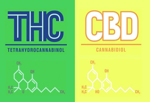 Sativa and Indica - CBD and THC