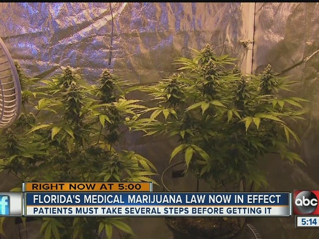 florida marijuana smoking ban lawsuit