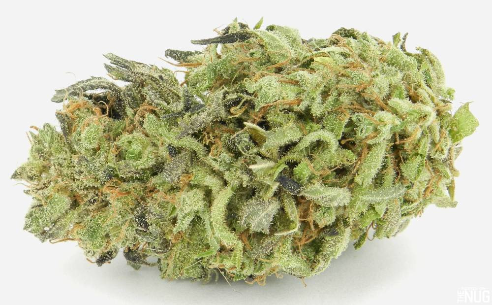 Durban Poison Marijuana seeds for sale