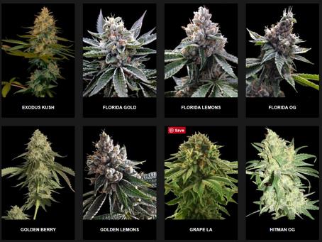 Coming Soon Florida's Medical Marijuana Laws | FLBest420.com