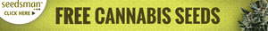 Triple Diesel marijuana seeds for sale