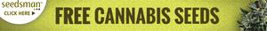 Buy the best marijuana seeds USA