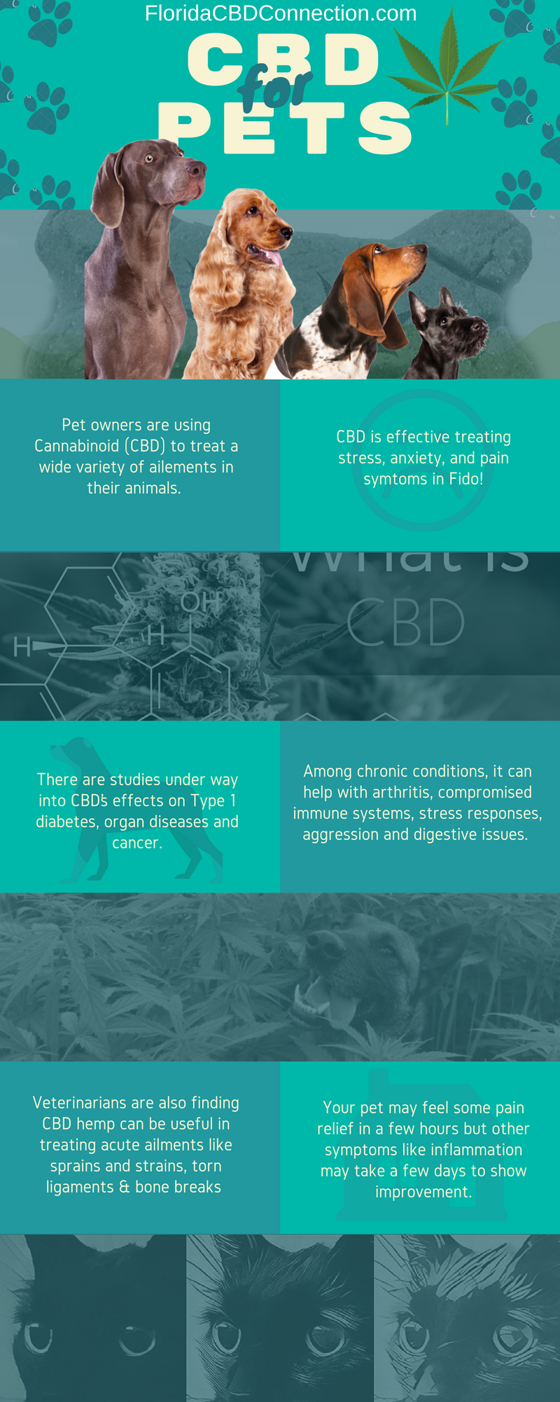 How CBD can benefit your pets health - Florida CBD Oil