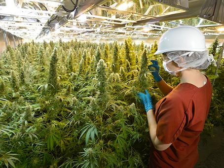 Top Medical Cannabis Jobs! Subscribe for Florida's List soon! Florida'sBest420..