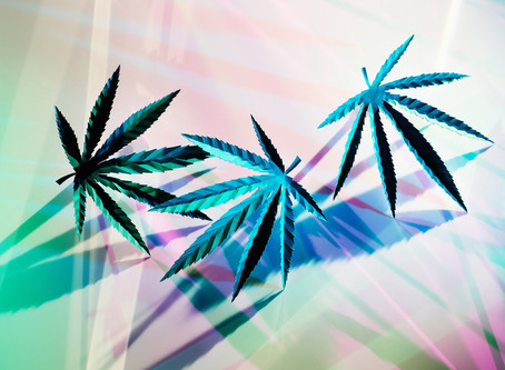 Key Factors Which Will Help You Build a Better Cannabis Brand