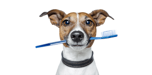 How CBD can benefit your pets health - Florida CBD Oil