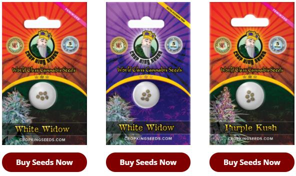 Gorilla Glue seeds for sale