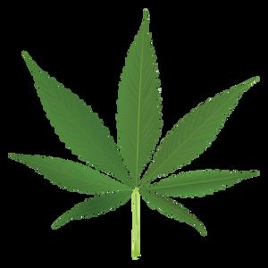 Opioid vs Marijuana death rates