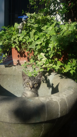 la nostra gatta Grey