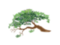 Riley's Jacaranda Tree-01.png