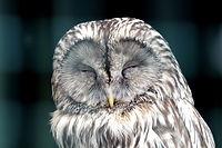 owl-2145698_1280.jpg