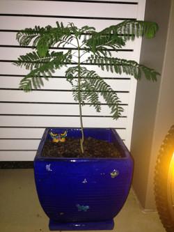 Riley's tree