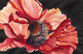 Poppy II.jpg