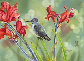 Hummingbird II.jpg