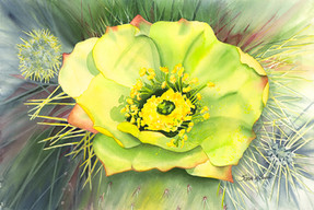 Buckhorn Bloom.jpg