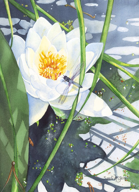 Waterlily with Dragonfly.jpg