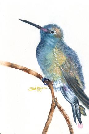 Blue Hummingbird.jpg