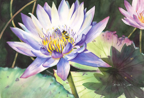 Waterlily with Bee.jpg