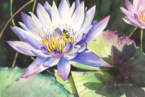 Waterlily with Bee