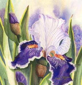 Iris IV.jpg