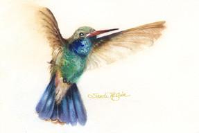 Blue Green Hummingbird.jpg