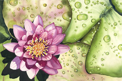 Waterlily with Drops