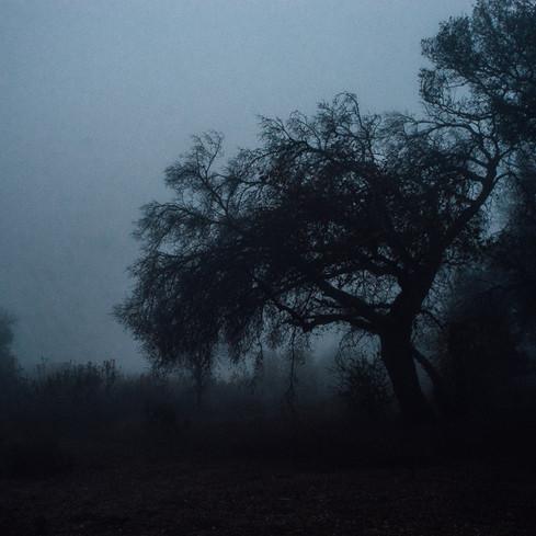 Foggy Simi Mornings