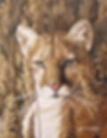 Cougar-wix.jpg