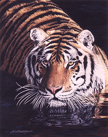 tiger in water_wix.jpg
