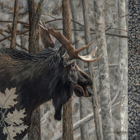 moose-wix.jpg