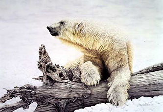 polar bear on log.jpg