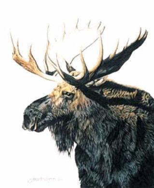 moose_portrait.jpg