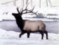 elk in snow.jpg