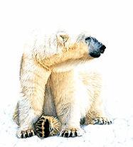 polar_wix.jpg