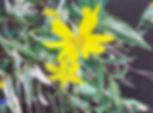 Lorie_flower.jpg