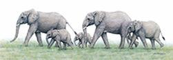 elephants_wix.jpg