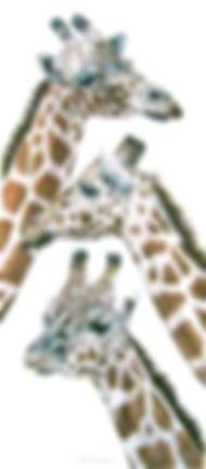 giraffes_newbig.jpg