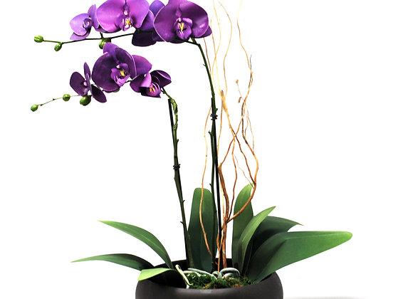 Elegant Purple Phalenopsis Potted Orchid
