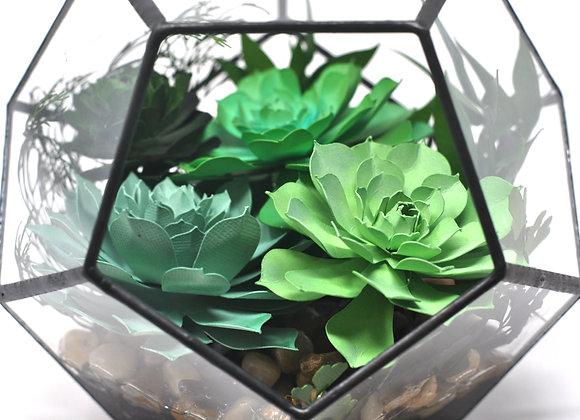 Hexagonal Succulent Echevaria Terrarium