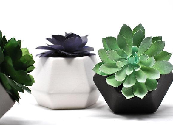 Hexagon Color Pop Succulent Mix + Match Trio