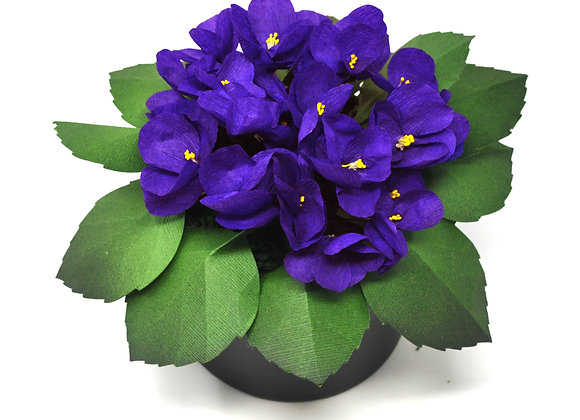 Precious Planted African Violet