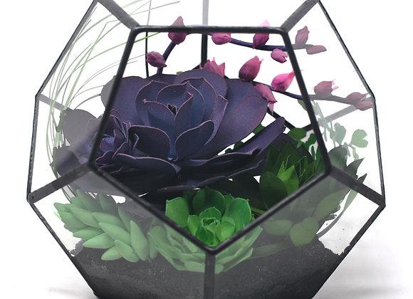 Pink + Purple Blooming Echevaria Hexagonal Terrarium