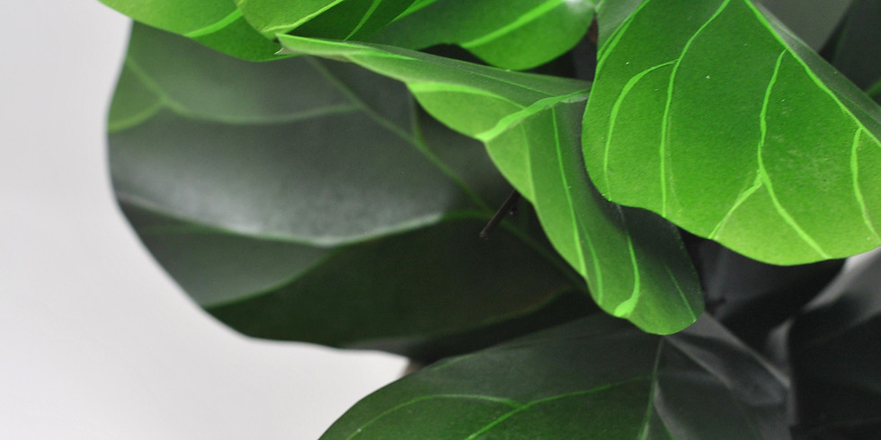 Create a Paper Fiddle Leaf Fig Tree
