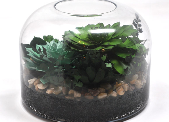 Large Dome Terrarium - Vibrant Green Succulent + Maidenhair Fern Collection I