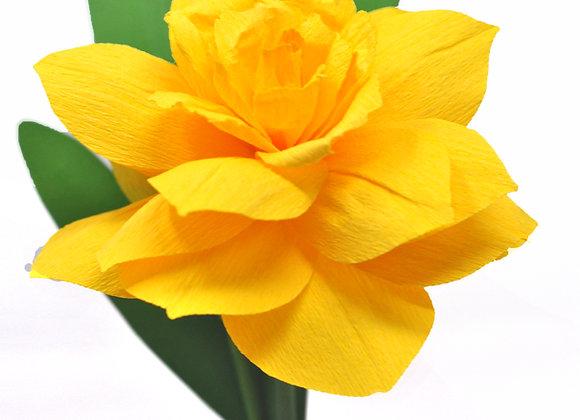 Sunshine Double Daffodil Display