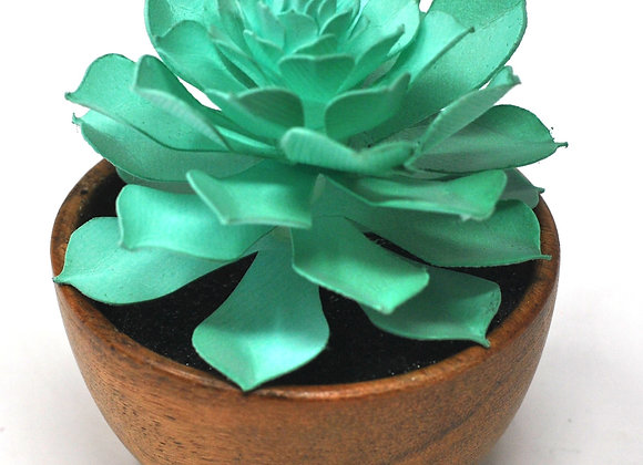 Mini Acacia Succulent Bowl