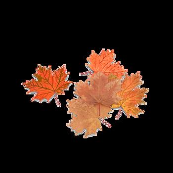 autumn-maple-leaves-AENQvkE-600.png