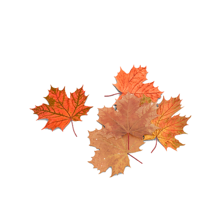 autumn-maple-leaves-AENQvkE-600.png