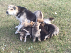 Mom and pups