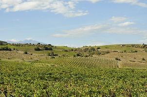 schiste, roche, terroir, Agly, roussillon, Côtes du Roussillon